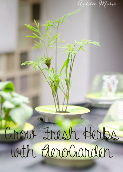 I love cooking and baking with fresh herbs so being able to grow my own, year round, is the best gift ever